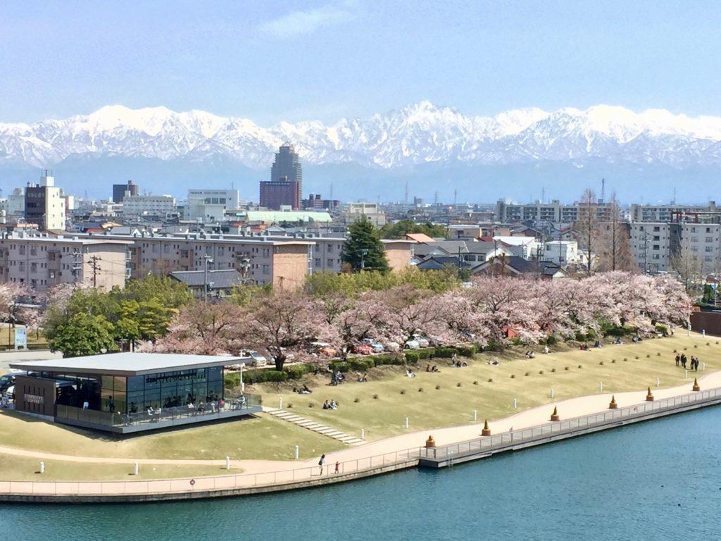 環水公園桜