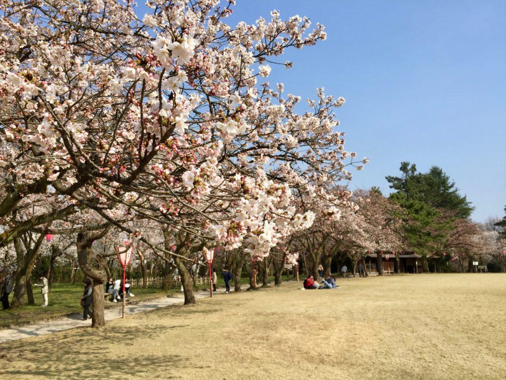 古城公園桜