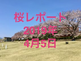 桜レポートイメージ