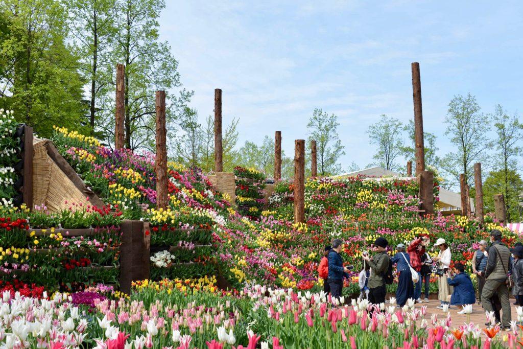 となみチューリップフェア花の大谷